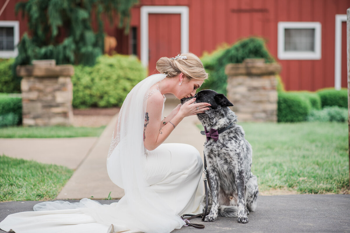 Bridal portrait with kissing her dog on her wedding dayat cedar lake cellars