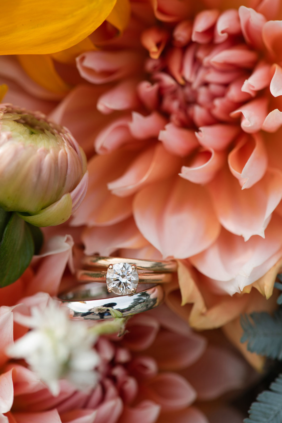 zinnias and gold rings