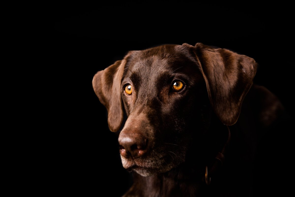 Alisa Messeroff Photography, Alisa Messeroff Photographer, Breckenridge Colorado Photographer, Professional Portrait Photographer, Pet Photographer, Pet Photography, Pet Portraits 1