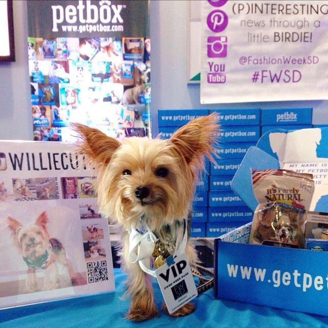 PetBox_Packaging_WillieCute_1