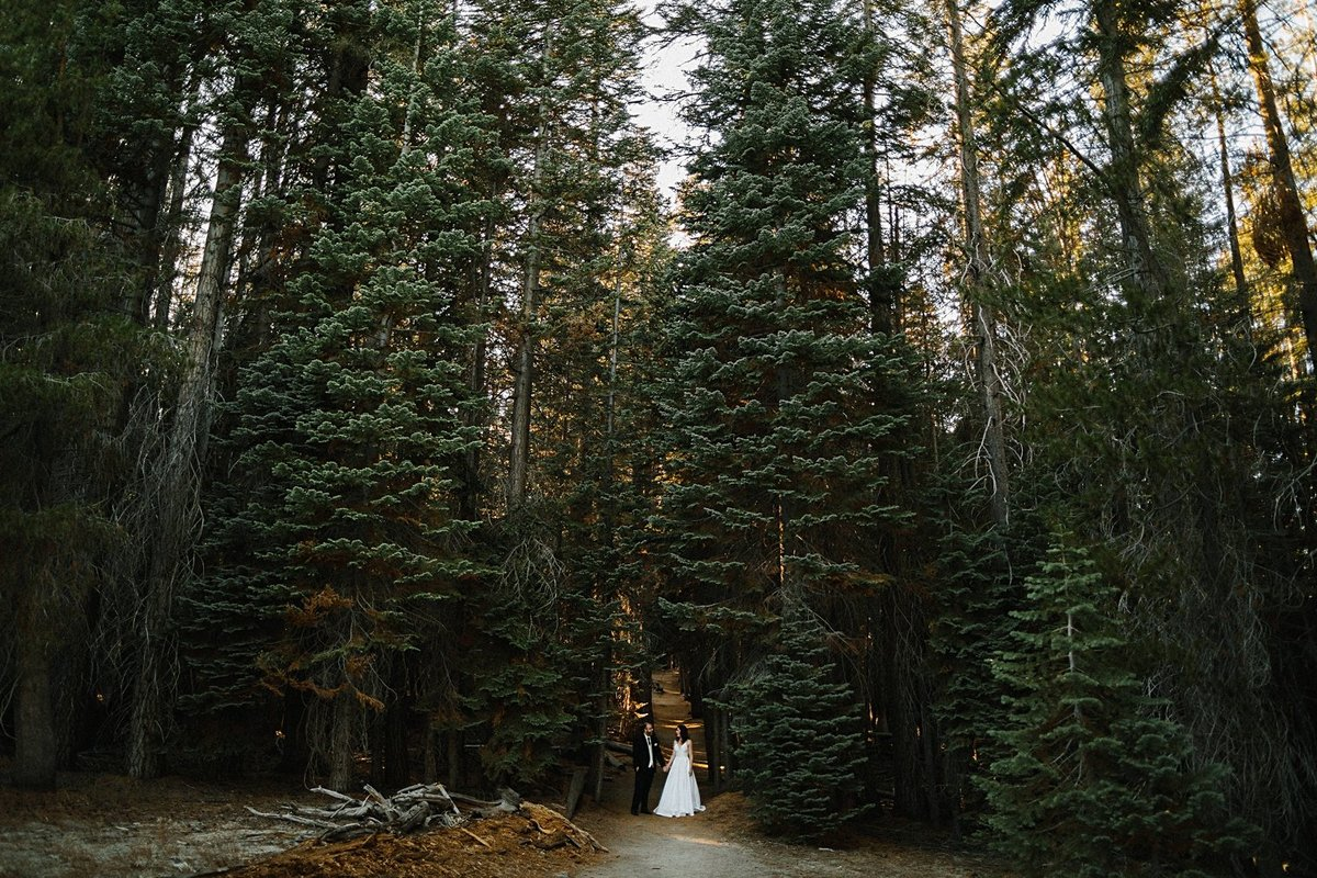 bride and groom in front of pine forest yosemite