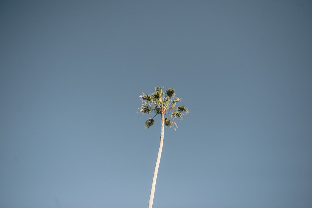 Palm-Tree-California