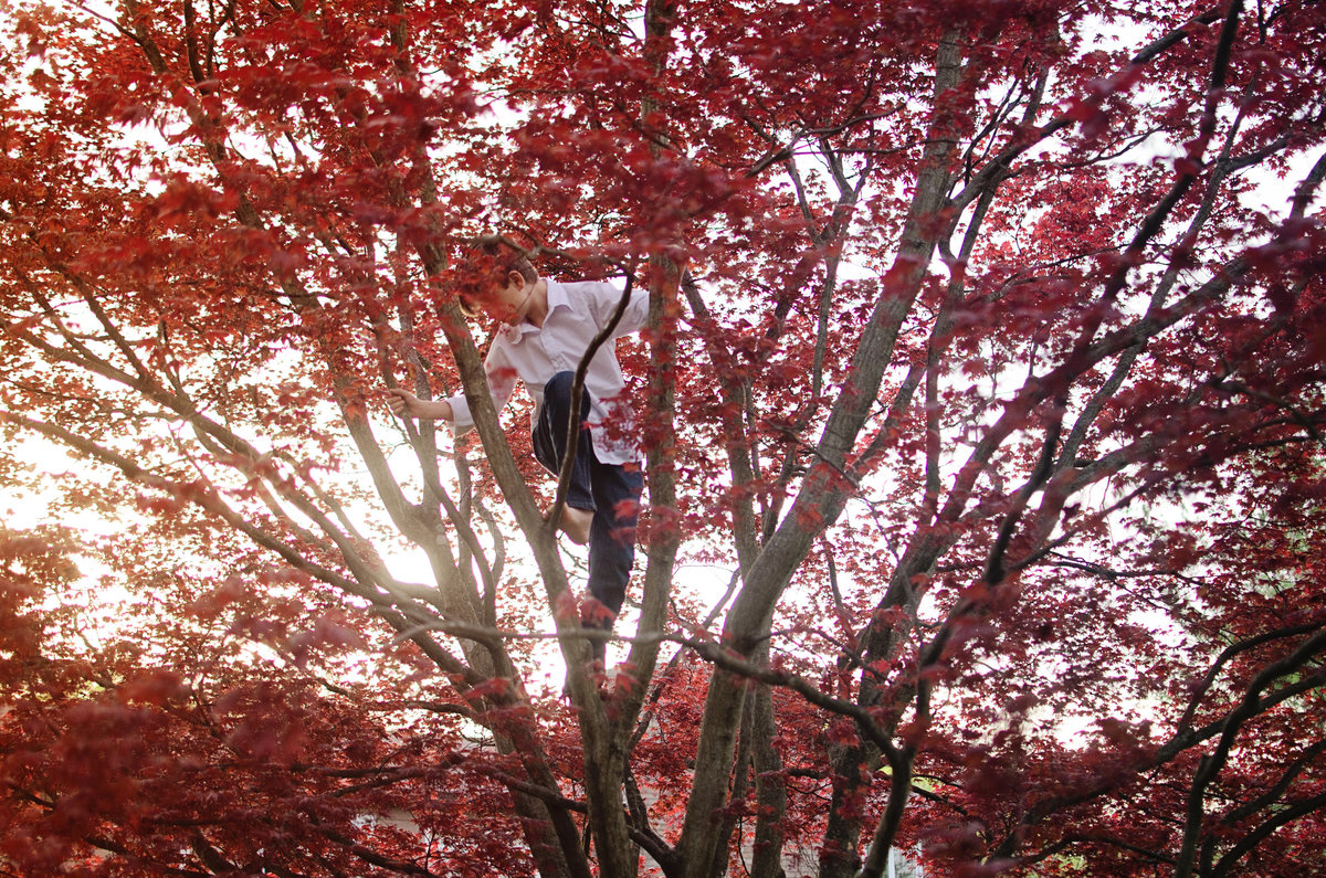 Portrait of a little boy climbing a Japanese Maple during a lifestyle session taken by Sarah Alice Photography in Northern Virginia