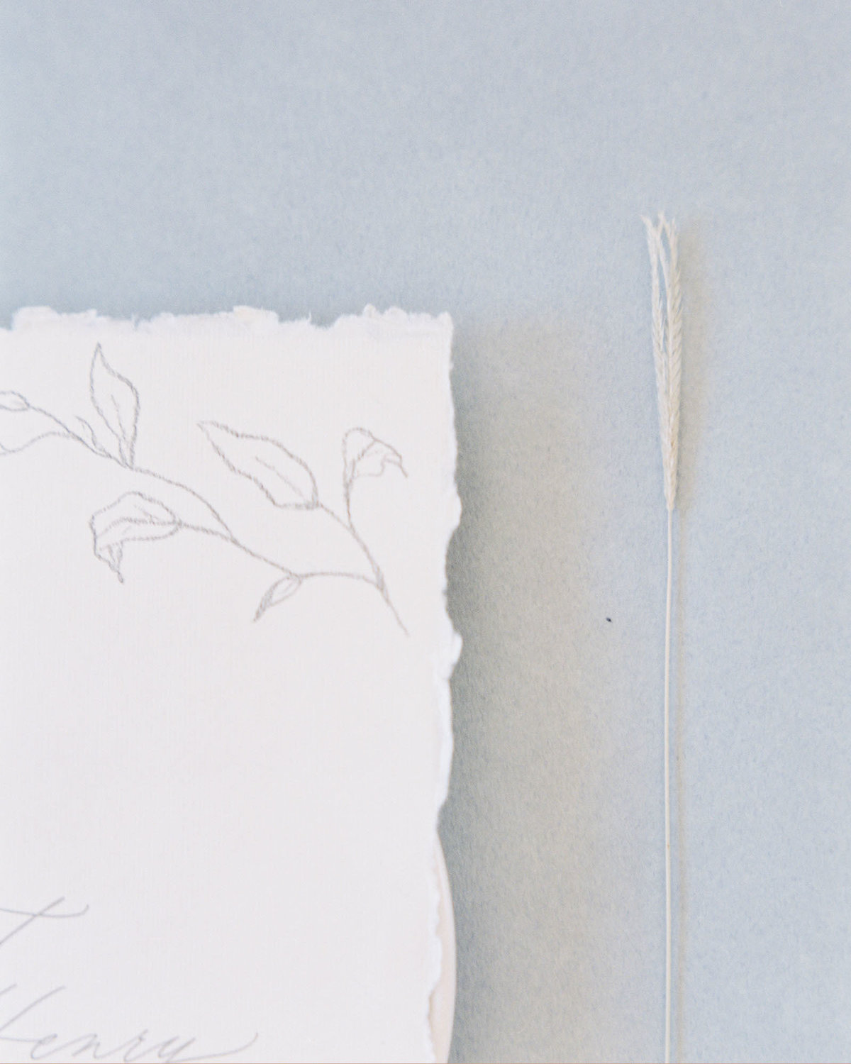 Dominique Alba minimalist wedding invitation collection Flora sketch detail
