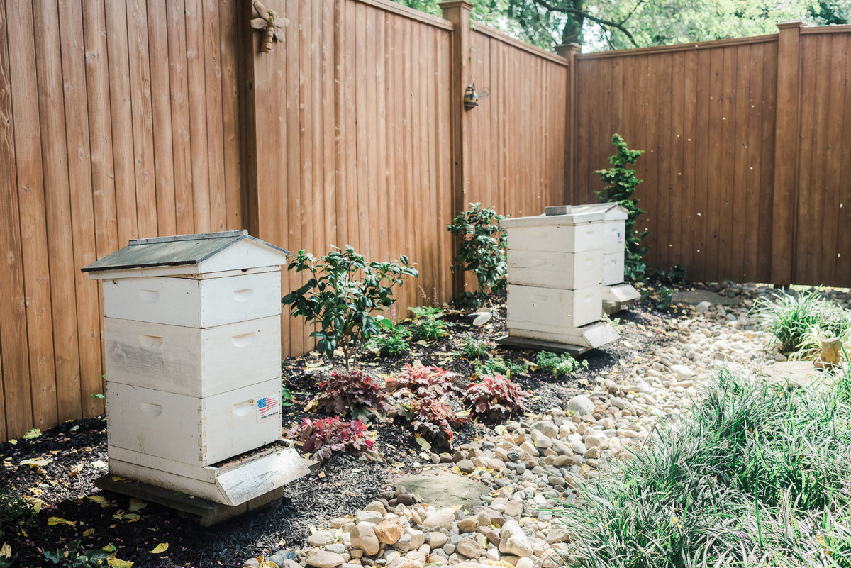Orthodontic Office Bee Hives | Annapolis Orthodontics Annapolis, MD