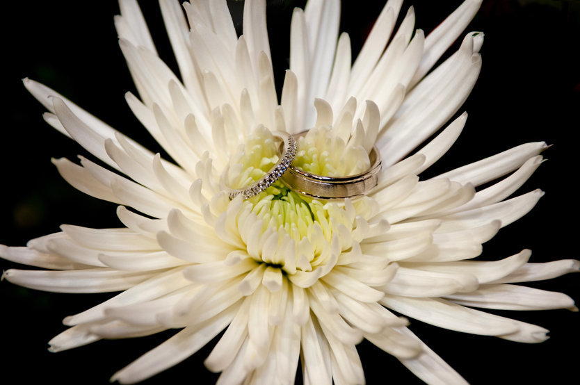 wedding ring detail in a gerber daisy