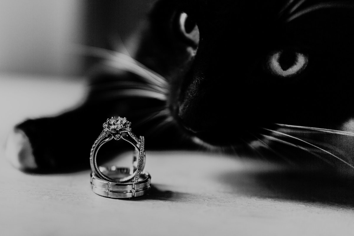 A photo of the bride and groom's rings as their cat takes a sniff