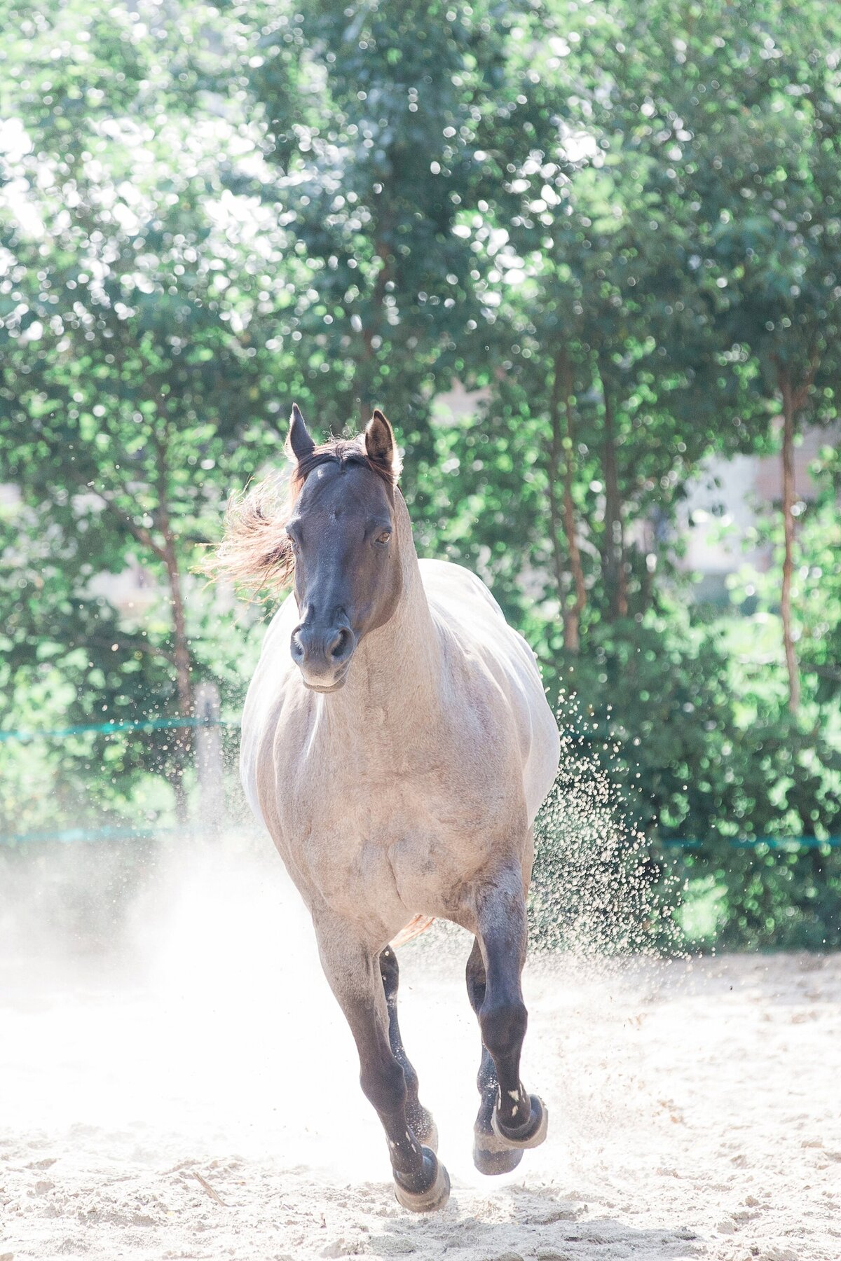 quarter horse running through the pasture.
