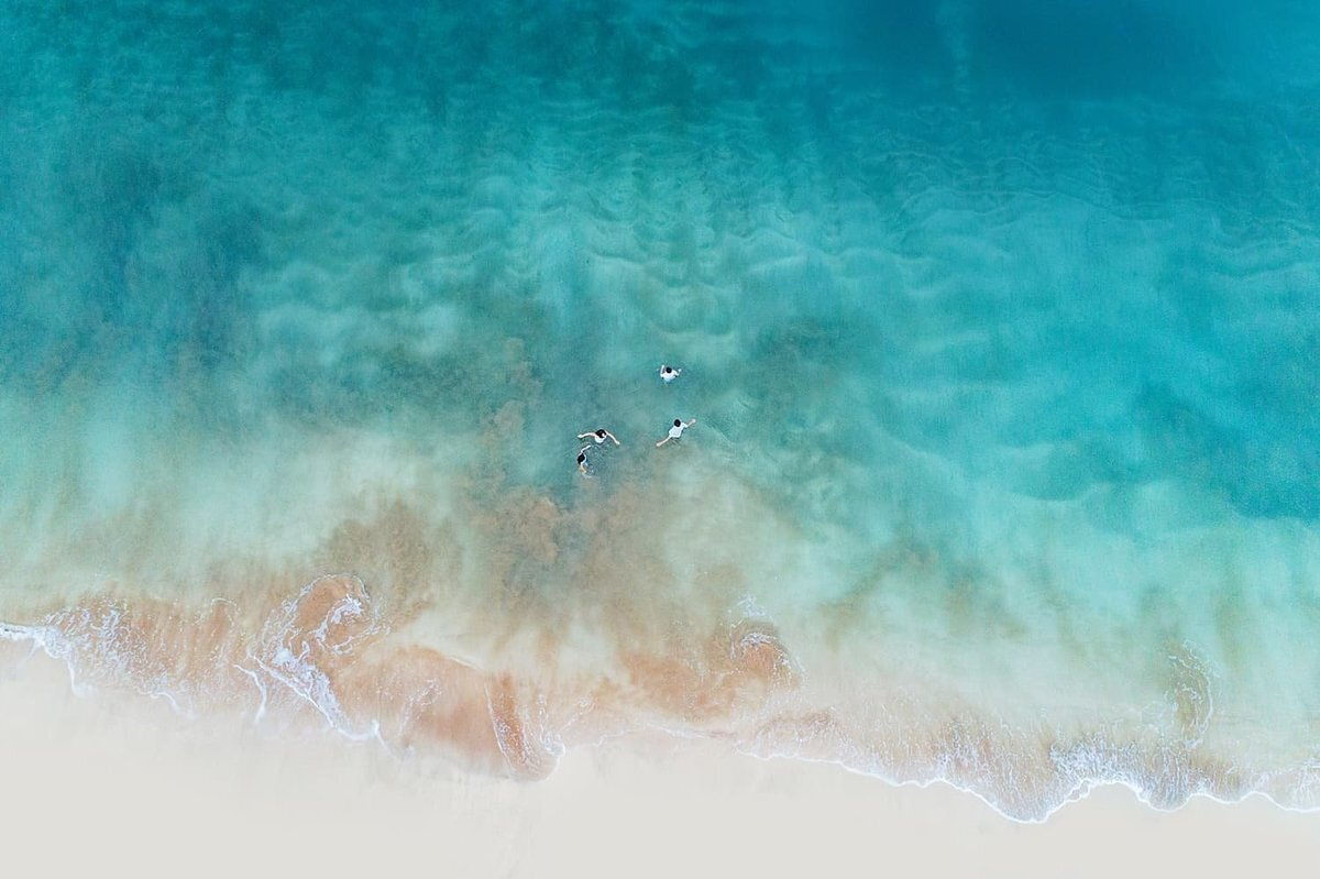 Drone family portrait with everyone swimming in the clear blue Maui water