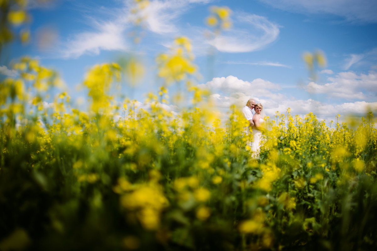 bride and groom in canola field