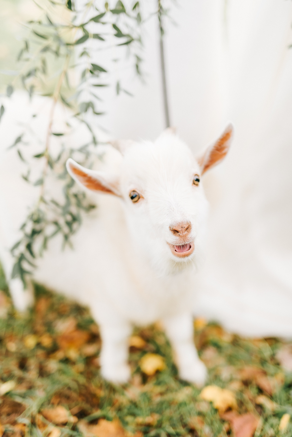 Lush Greenery Wedding Inspired Styled Shoot at Cornman Farms Baby Goat