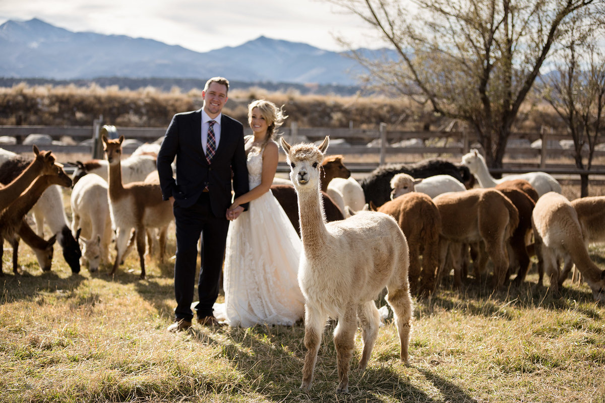 Everett Ranch Rocky Mountain Wedding Outdoor Barn Rustic Salida Colorado Alpaca Collegiate Peaks Vintage Ranch Fall Blush 007