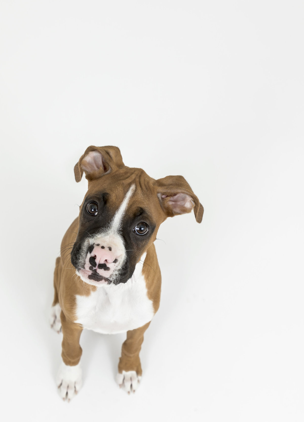 best studio pet photographer san diego