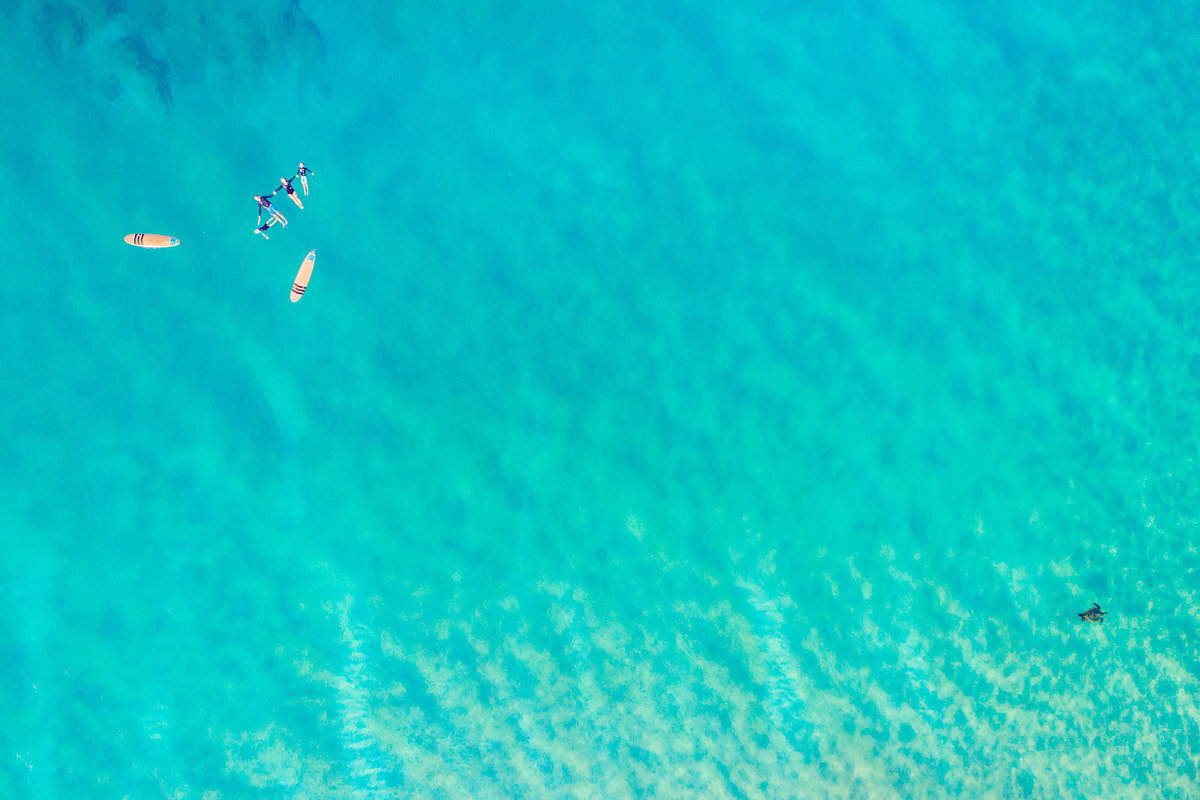 Family of four on surfboards photographed by drone on Maui while turtle swims next to them