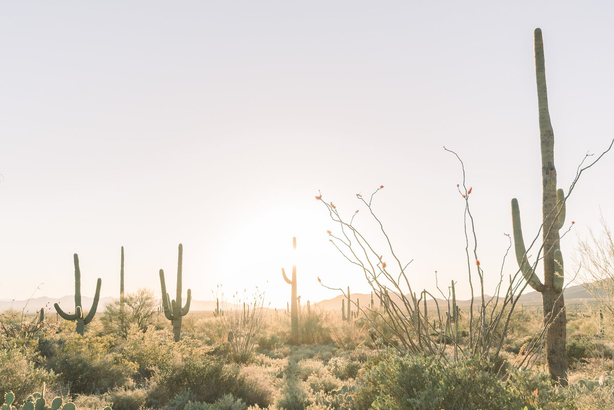 Tucson-Airbnb-Rental-High-Res-100
