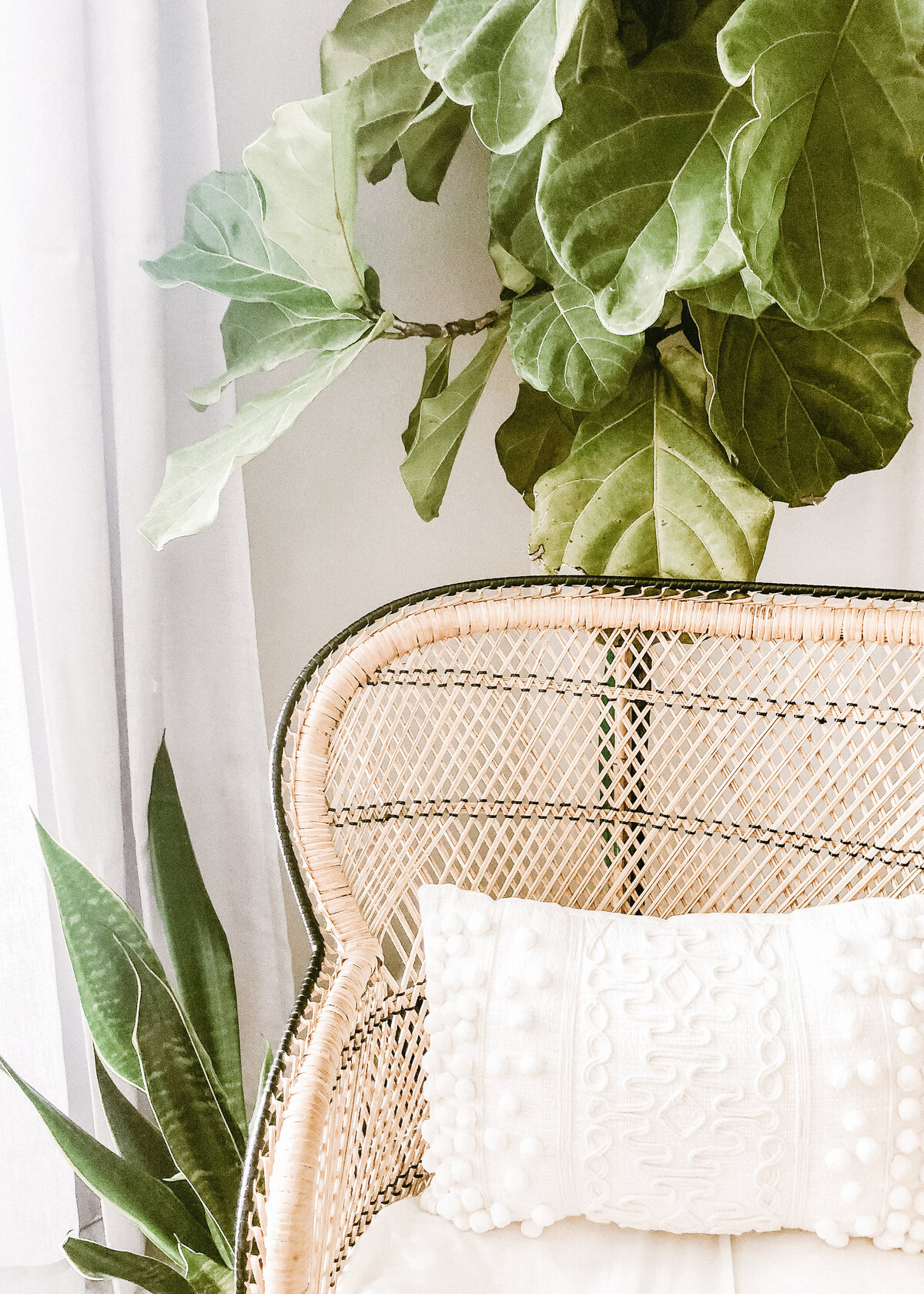 A natural rattan chair with a textured white cushion has a large fig tree behind it as interior decor.