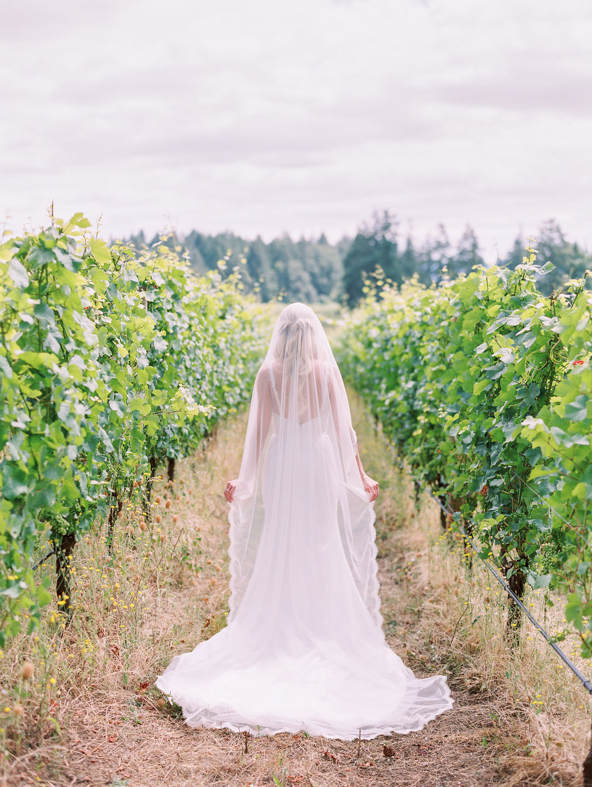 beautiful bride in the vineyard at Vista Hills