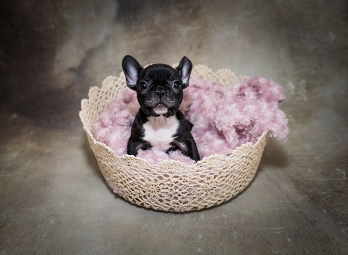 Pet Photographer, Lake Charles, LA
