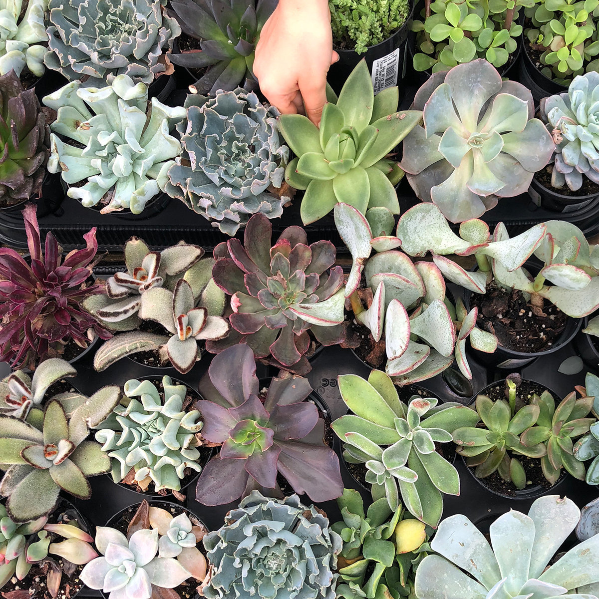 Group of colorful succulent plants gathered together