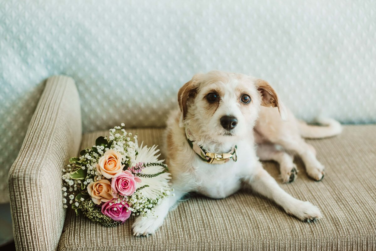 dog-and-wedding-bouquet