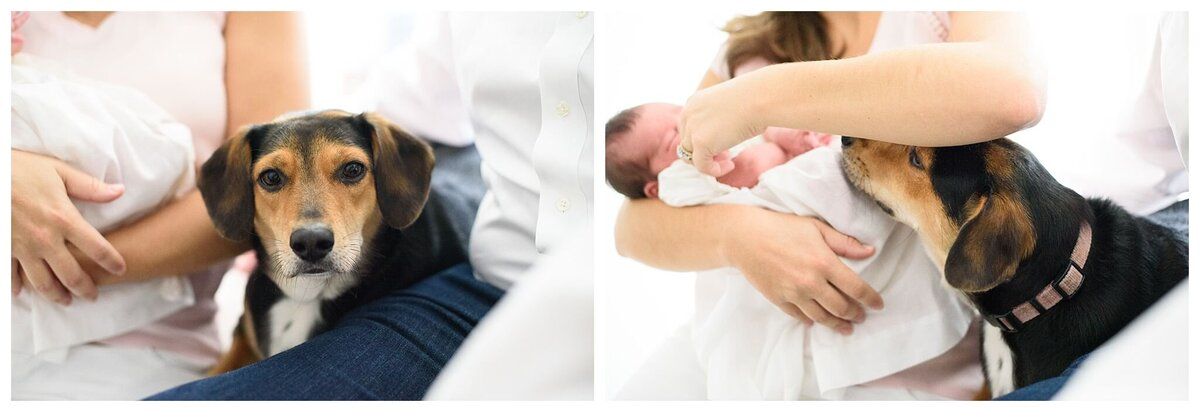Mother holding baby and dog watching