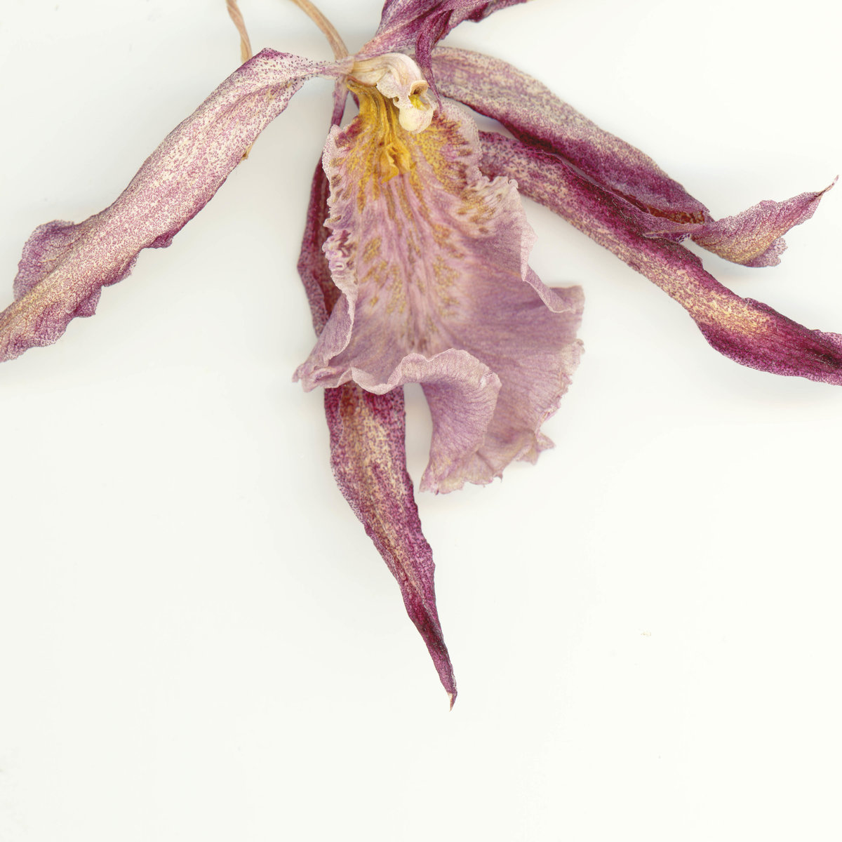 fine-art-photographer-san-francisco-bay-area-camille-rogine-old-orchid015