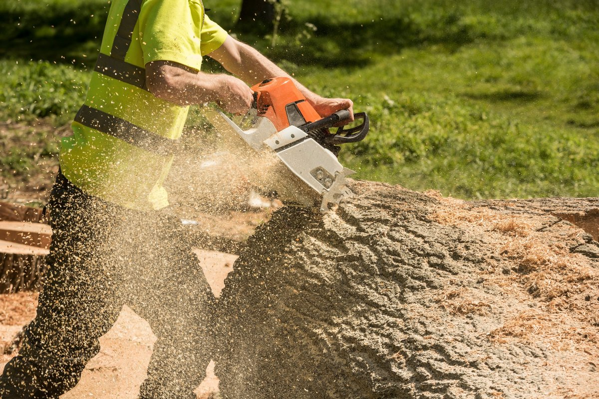an-arborist-cutting-up-a-tree-trunk-to-haul-away_t20_kRR472