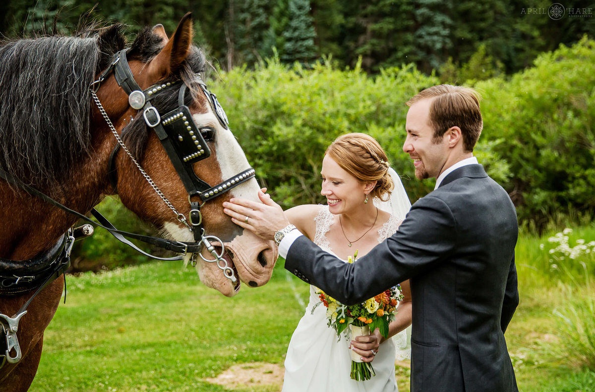 Colorado Wedding Photography Couple pets a horse at Wedgewood Weddings Mountain View Ranch