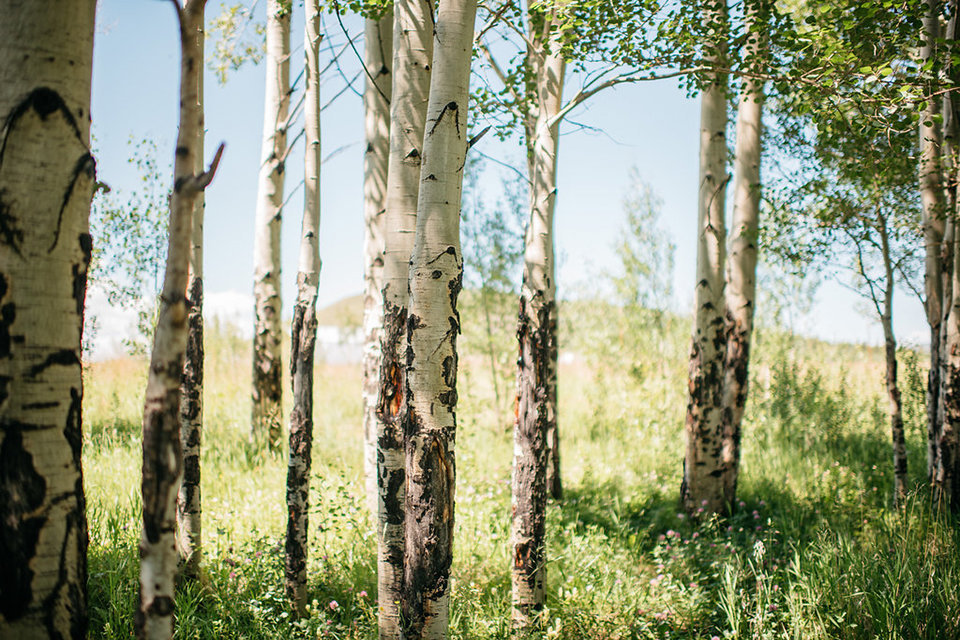 Strawberry-Creek-Ranch-Modern-Minimalist-Outdoor-wedding-in-Granby-Colorado-Aspens