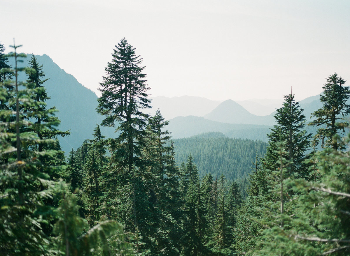 views from mt rainier national park film photography pentax645 fujifilm indie film lab