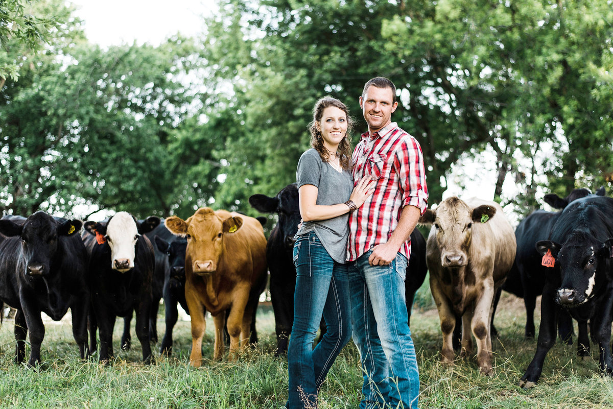 engaged couple poses in front of cows