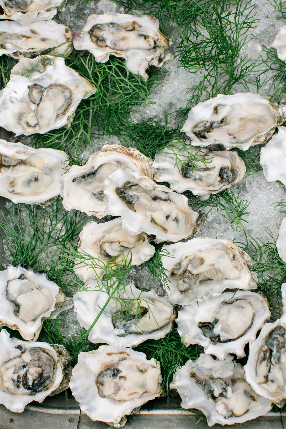 29-KTMerry-wedding-photography-oysters-horsdoeuvres