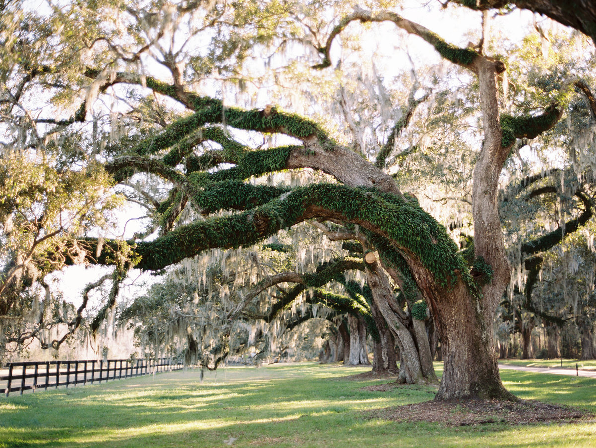 boone-hall-plantation-wedding-charleston-philip-casey-03