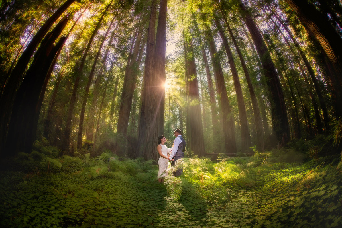 Redway-California-elopement-photographer-Parky's-Pics-Photography-redwoods-elopement-Avenue-of-the-Giants-Pepperwood-California-16.jpg