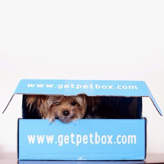 PetBox_Packaging_WillieCute_4