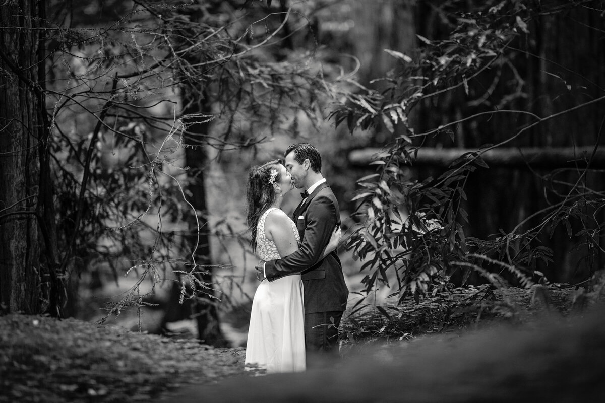 Avenue-of-the-Giants-Redwood-Forest-Elopement-Humboldt-County-Elopement-Photographer-Parky's Pics-3