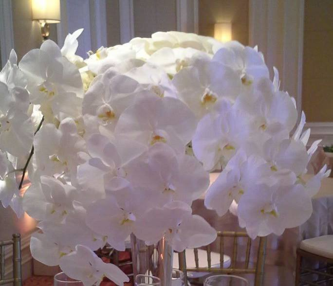 white phalaenopsis orchids The Eau Palm Beach