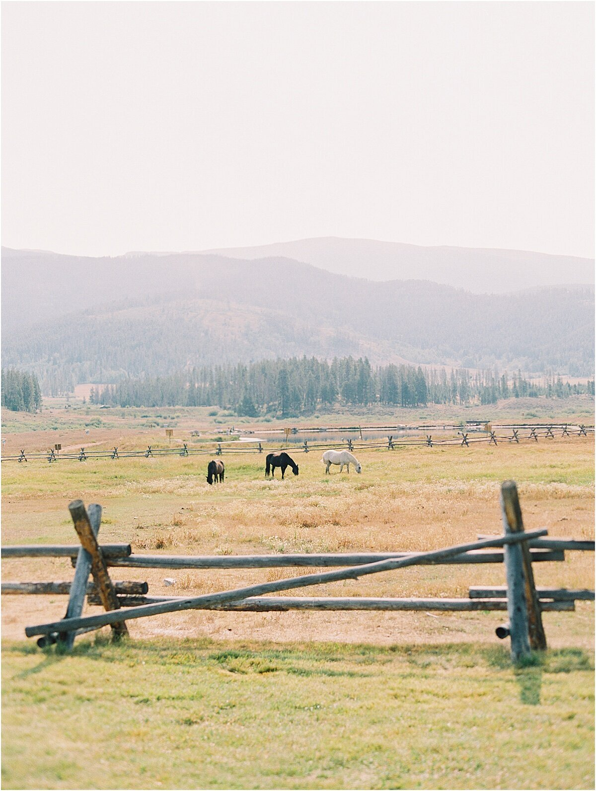 horses in colorado ranch