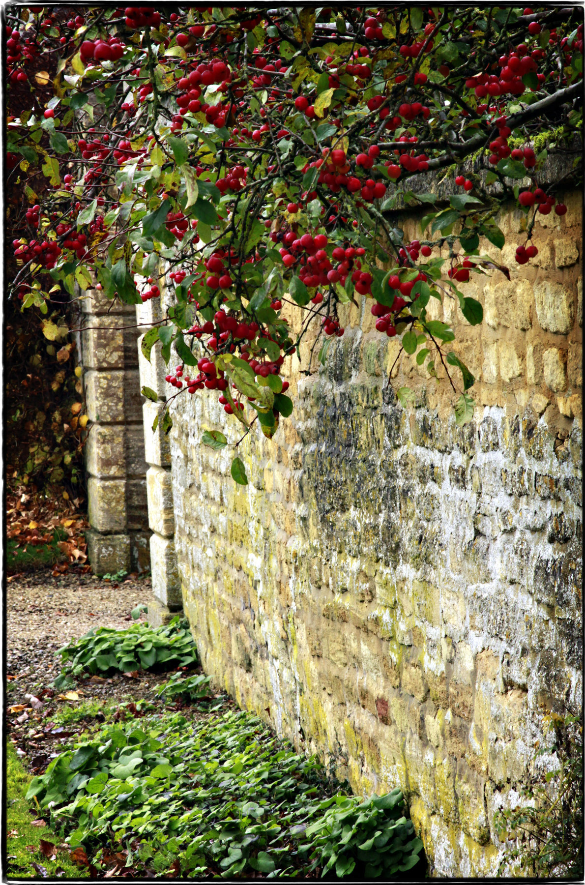 Cotswold Crabapples 2 - wb