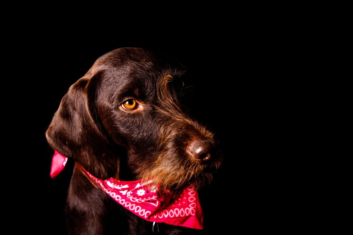 Alisa Messeroff Photography, Alisa Messeroff Photographer, Breckenridge Colorado Photographer, Professional Portrait Photographer, Pet Photographer, Pet Photography, Pet Portraits 2