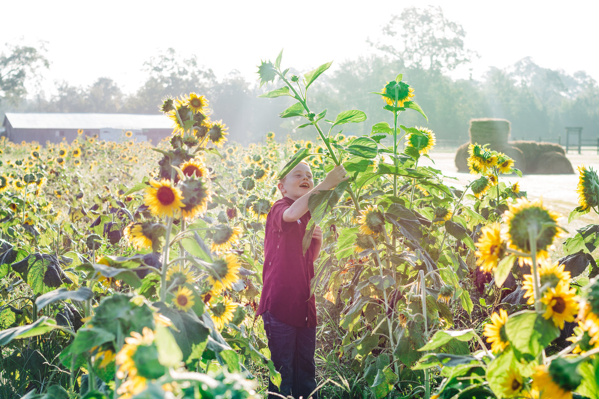 Red_Head_SunFlowers_02