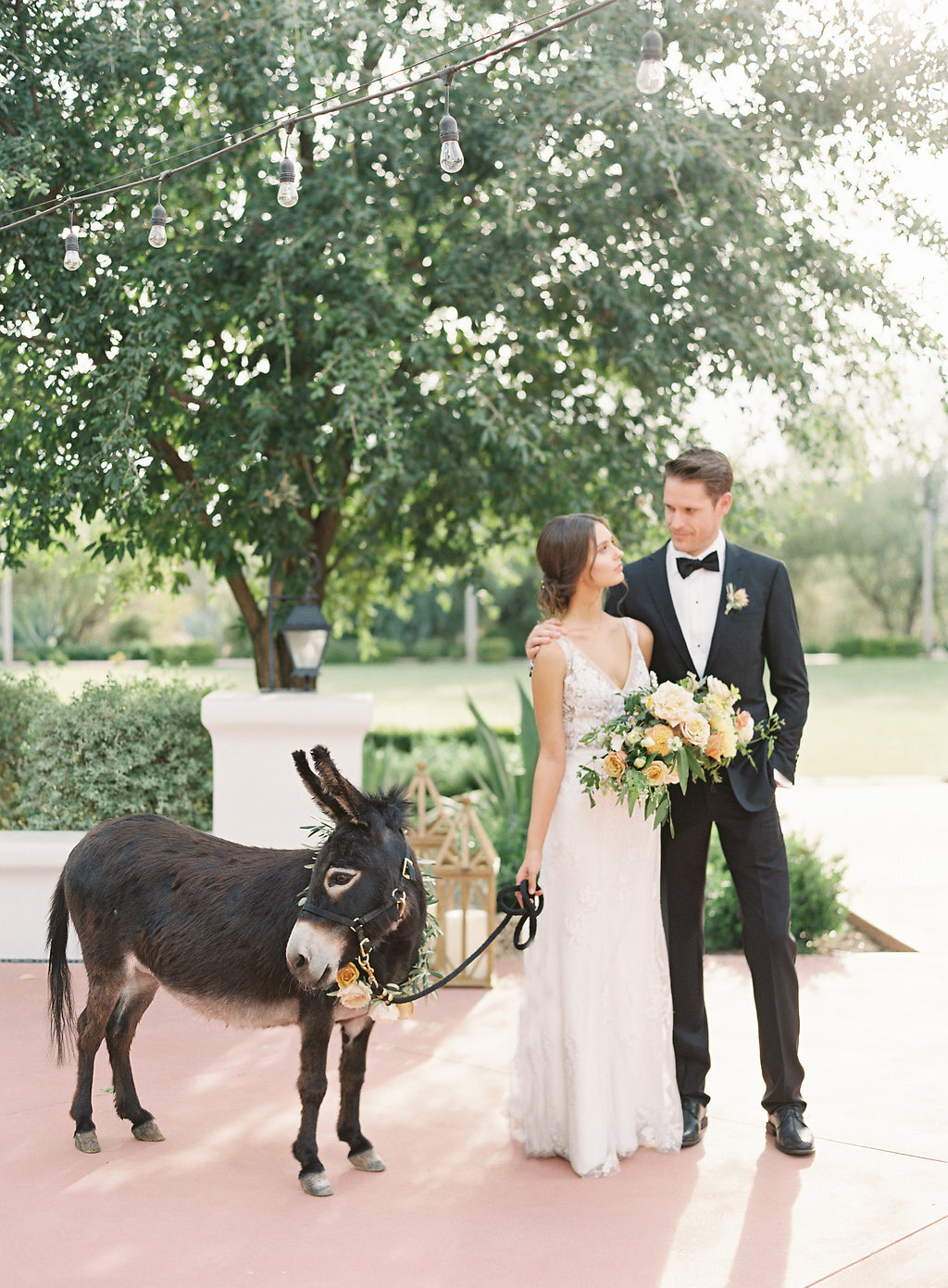 wedding-donkey-arizona