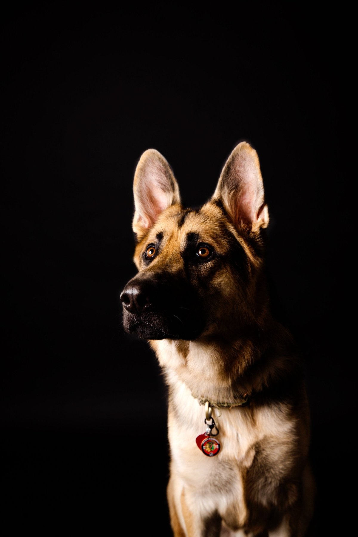 Alisa Messeroff Photography, Alisa Messeroff Photographer, Breckenridge Colorado Photographer, Professional Portrait Photographer, Pet Photographer, Pet Photography, Pet Portraits 4