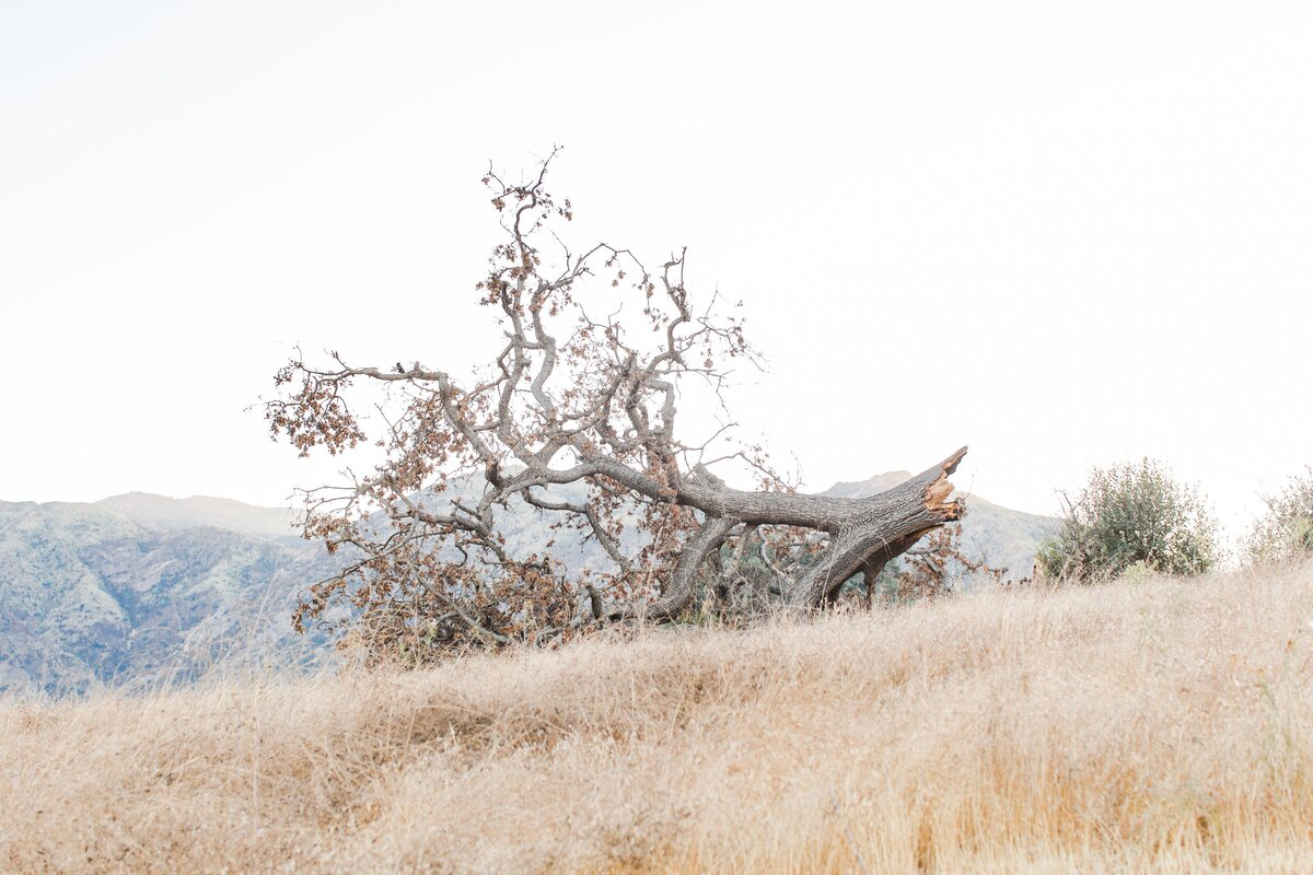 blog-Malibu-State-Creek-Park-Engagament-Shoot-boho-0037