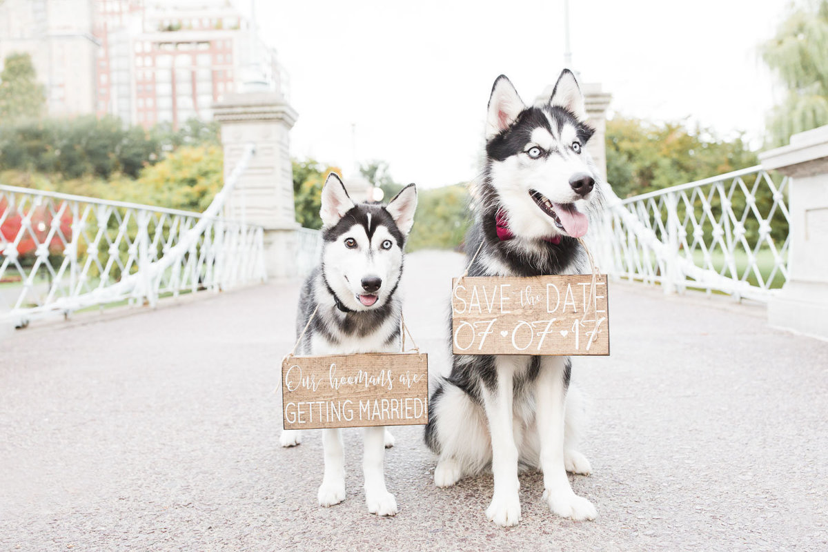 Two Huskies standing on a bridge in the Boston Public Garden