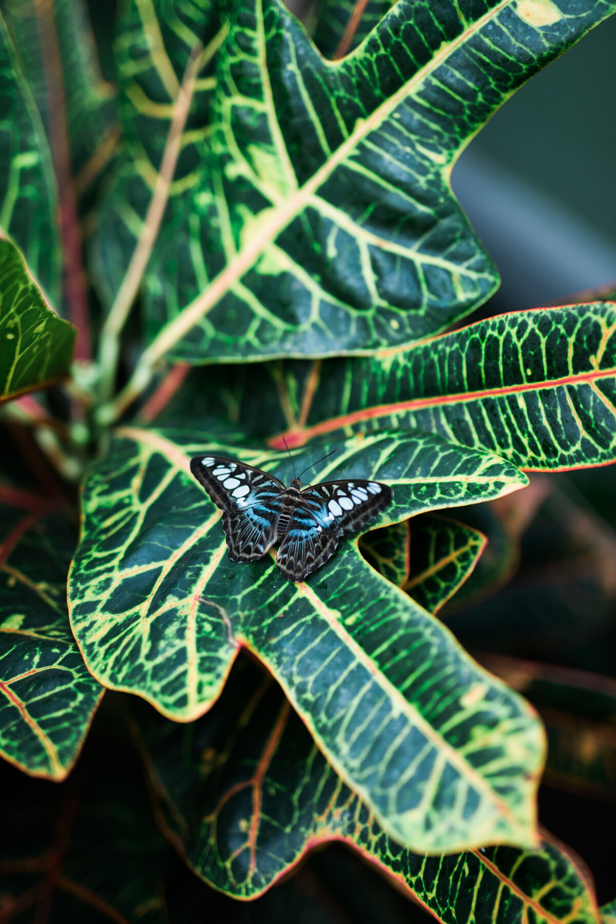 a butterfly rests on tropical plants