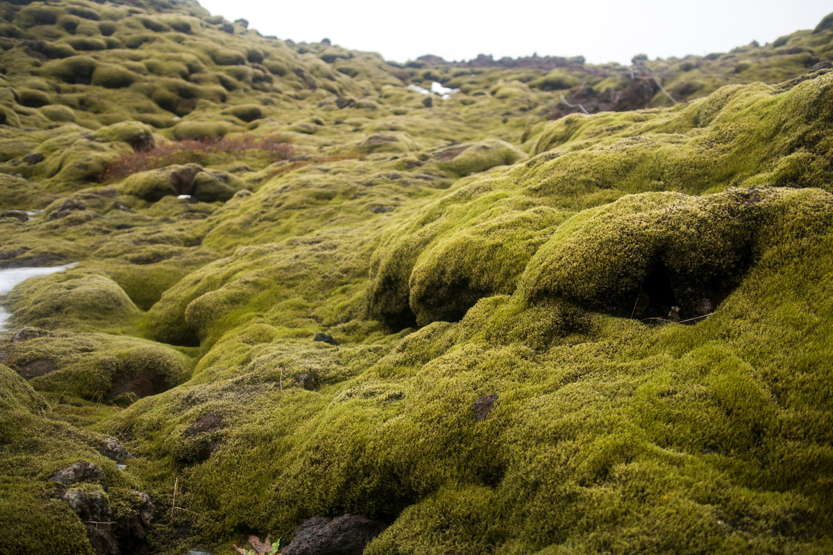 moss covered hillside in Iceland