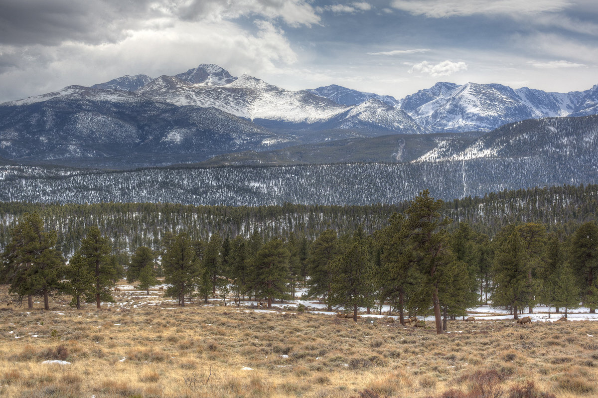 wildlife and snowcap mountains in estes park colorado