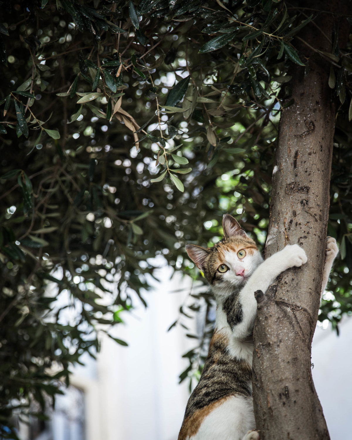 marrakech tree cat