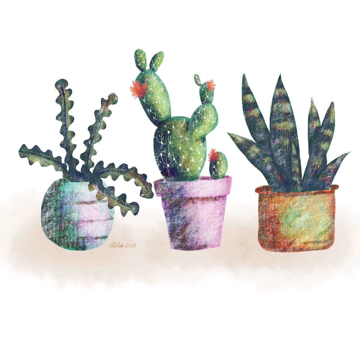 cacti illustration ellila designs